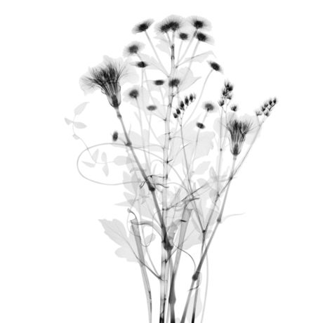 (CreativeWork) X-Ray 0 Ed. 1 of 10 by alex buckingham. Photograph. Shop online at Bluethumb.