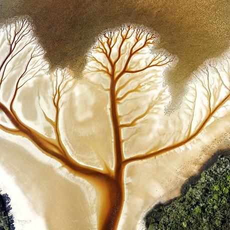 Tannin coloured creek in dendritic pattern flowing across a tidal flat.  Tree of life pattern