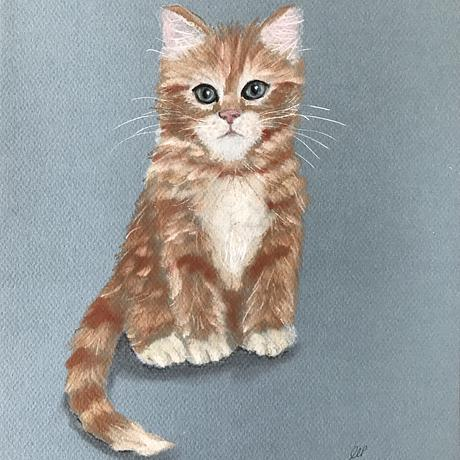 Cute ginger kitten sitting down facing forward on a blue background.