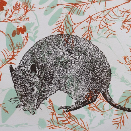 Dark brown bandicoot linocut print over abstract etched leaf patterns in ochre red and turquoise.