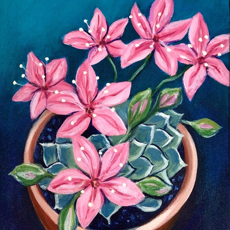 Succulent with pink flowers in a terracotta pot.