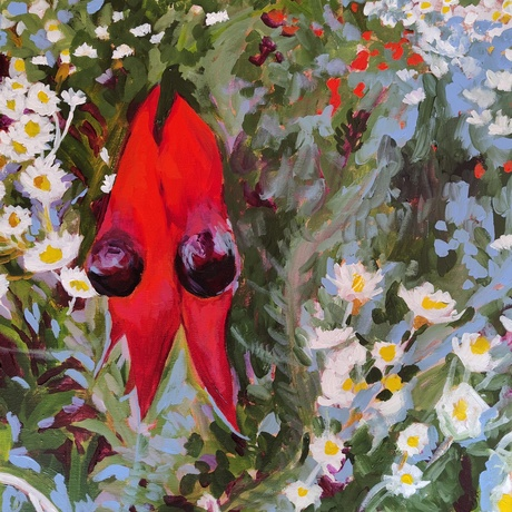 Sturt's Desert Pea and Poached Egg Daisies