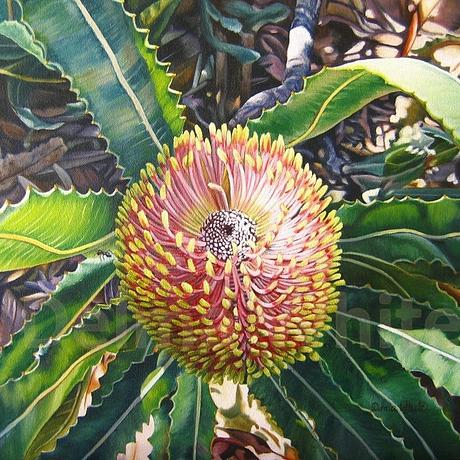 A view of the flower of Banksia menziesii with leaves flowing out from the centre and an ant on a leaf.