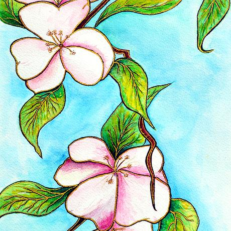 Apple Blossom watercolour in frame