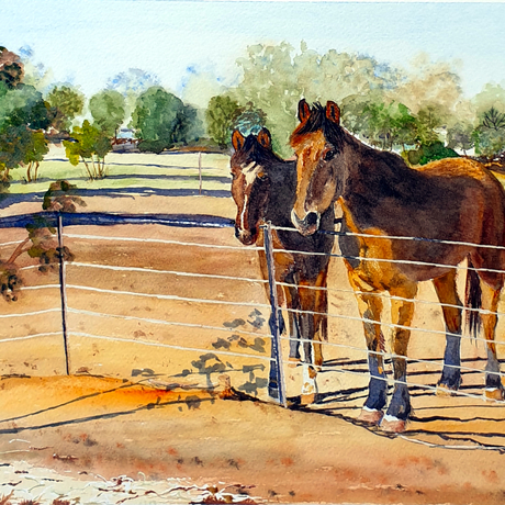 A simple outback landscape depicting a bare paddock of ochre red earth and two horses which came over to us as we were standing next to their fence