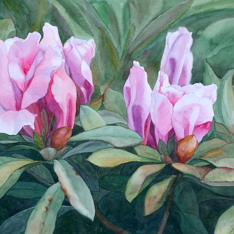 (CreativeWork) Blossoming Trio by JAN LAWNIKANIS. Watercolour. Shop online at Bluethumb.