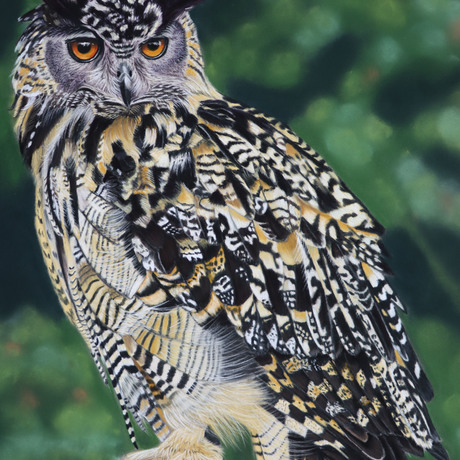 (CreativeWork) European Eagle Owl by Kathleen Pieterse. Other Media. Shop online at Bluethumb.