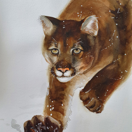 (CreativeWork) Cougar Prowing by Yue Qi. Watercolour. Shop online at Bluethumb.
