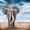 (CreativeWork) My brother led the walk that day - African Series (Large elephant) by Sandra Benskin. Oil. Shop online at Bluethumb.