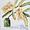 Coastal Banksia cutting in a green bottle