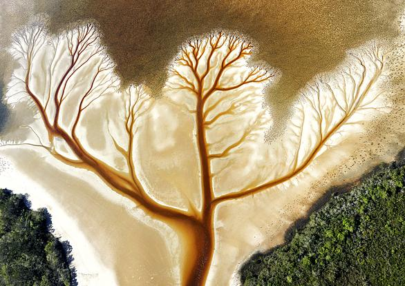 (CreativeWork) Tree of life Ed. 1 of 50 by Stuart Chape. Photograph. Shop online at Bluethumb.