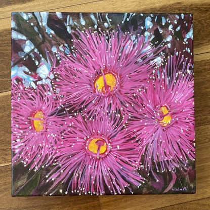 Joyful pink gum blossoms  in amongst the foliage, with hints of blue sky peeking through