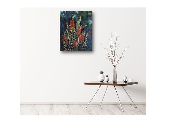 Australian red bottlebrush in flower.