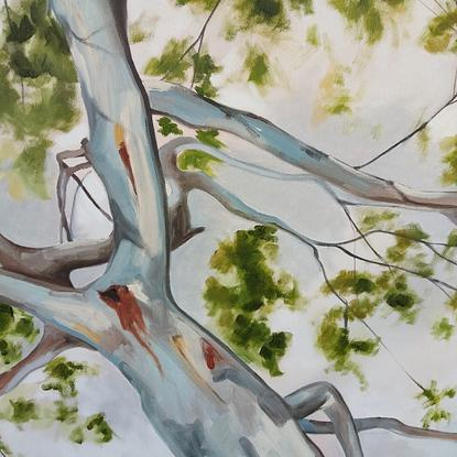 view of gum tree from below