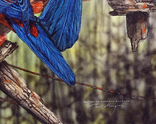 Three Crimson Rosellas sitting on a fence post with wings extended