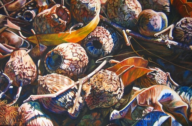 Australian gumnuts laying on the ground amongst leaves and branches, ready to disperse their seeds