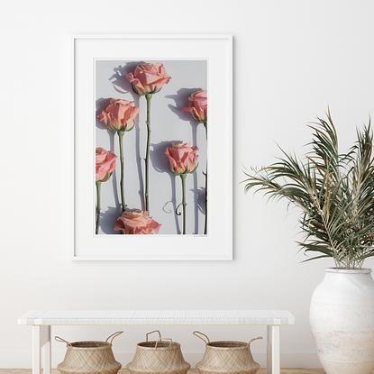 Limited edition floral photography by Lauren Daly.