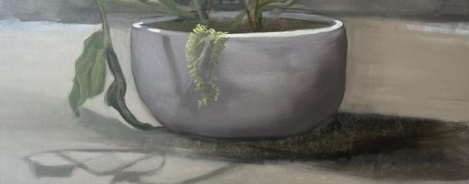 Long stemmed green leaved plant in a half-sphere concrete pot with light green highlights on the leaves.