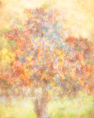 (CreativeWork) Autumn At The Old Homestead Ed. 4 of 100 by Shirley Steel. Photograph. Shop online at Bluethumb.