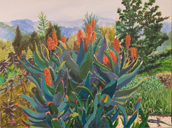 with a background of the blues of the Blue Mountains National Park and the various tones of creams and greens of the trees and shrubs, is a striking specimen of the Agave plant with it's large blue green spiky leaves and multiple stems with long coral red blooms