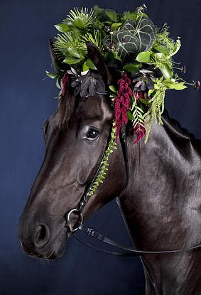 (CreativeWork) Oscar Horse Ed. 1 of 20 by GRACE COSTA. Photograph. Shop online at Bluethumb.